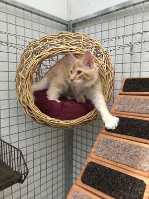 Rattankugel im Katzengehege