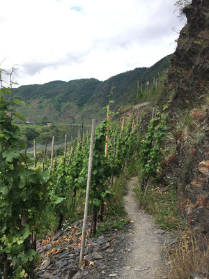 The Mosel's steepest site