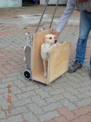 carrello scale per cane