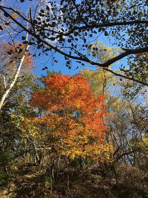 色づき始めた木々の美しさに見惚れてしまう。
