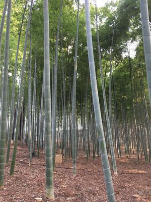 表門から一の木戸を通り抜けると孟宗竹林が広がる。