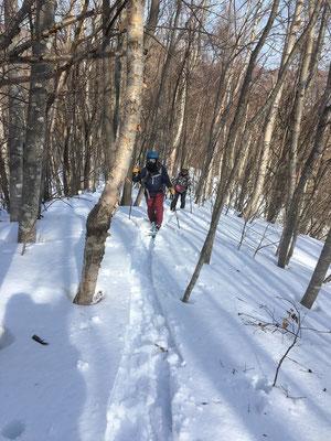 2021.3.5 樺の木が立ち並ぶ尾根を快適に登る。何と言っても地形図を頼りに自分でルートを切り拓き、歩くのが冬山の魅力。この後、稜線上で雪の上を歩く蝦夷雷鳥(エゾライチョウ)に出会った。
