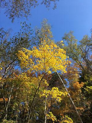 苔の回廊を抜け、川原のように広々としたところに出ると明るい陽射しが眩しい。