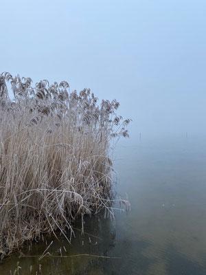 Gefrorenes Schilf am Seeufer
