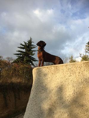 Der Hund hat einen neuen Lieblings-Aussichtsplatz.