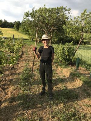 Juni 2021 - Arbeiten im Weingarten