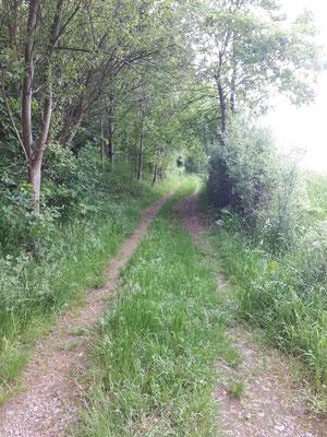 Wanderweg Kloschwitz-Kröstau vor der Pflege
