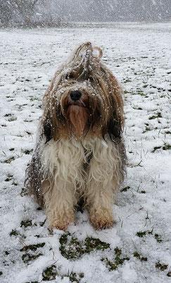 Milka im Schneesturm