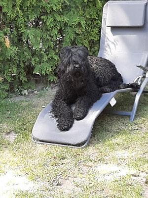 >Iva und der Liegestuhl