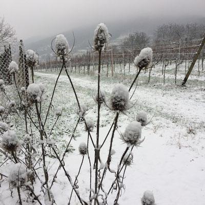 Schnee auf Karden: winterliche Eindrücke (Dagmar Schülke)