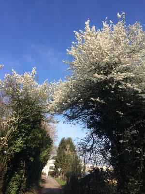 Frühling im Neuewingert (Dagmar Schülke)