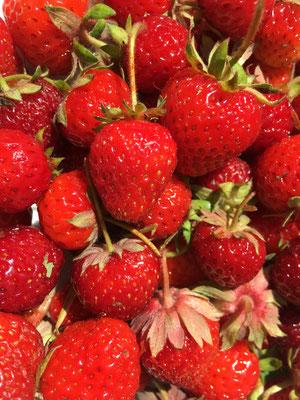 Erdbeeren aus dem eigenen Garten (Dagmar Schülke)