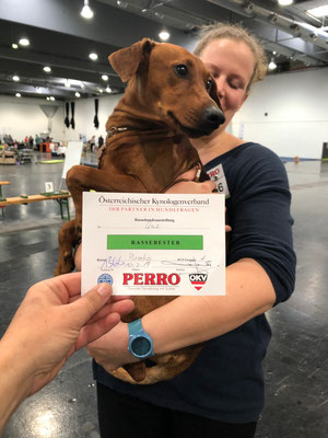 RMP A Red Star Amaryllo BEST Of BREED