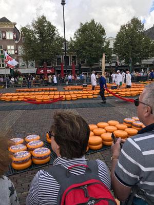 Alkmaar Käsemarkt, am ersten Tag
