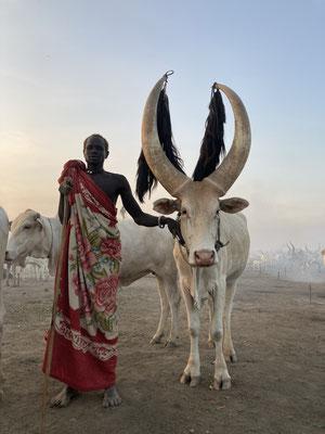 коровы в племени Мундари