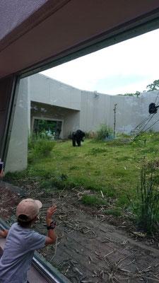 チンパンジーの写真
