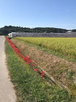 彼岸場の農道