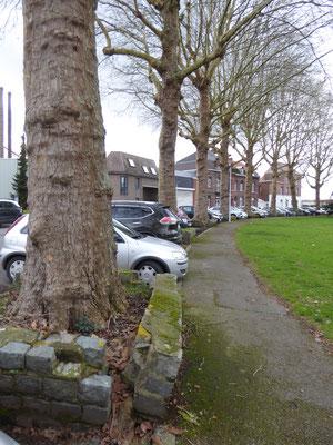 Doornik- Platanen aan de Avenue Delmée
