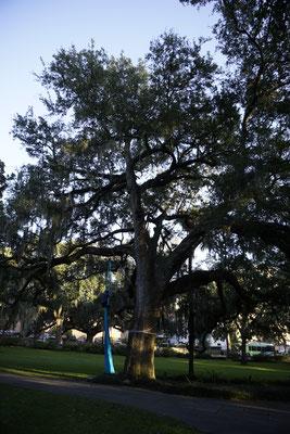 Savannah city