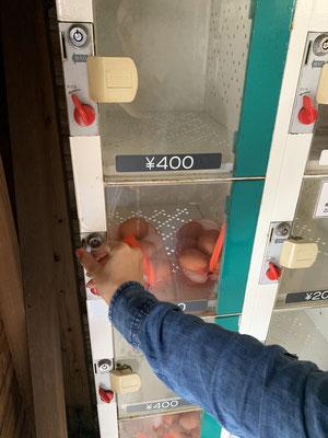 Eier Verkaufs Maschine