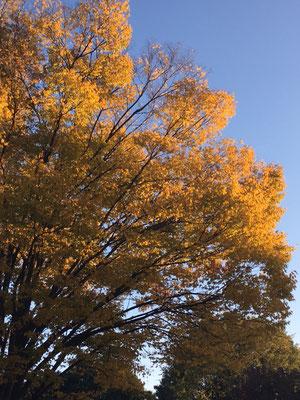 昭和記念公園の紅葉に、うっとり