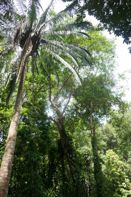 botanischer Garten auf Penang