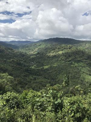 Blick in den Urwald von Rio Verde