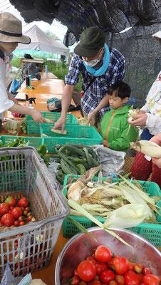収穫した野菜は「さとやま農学校」の皆さんでシェア