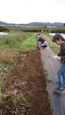 不耕起の畑のわきに大麦の種をまきます。五月の麦穂の季節を想いながら。