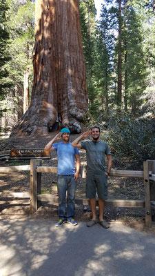Salutieren vor dem General Grant Tree