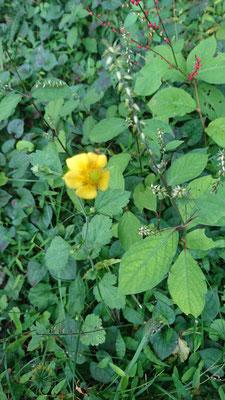 秋の草花 1