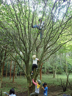 高い木木登り