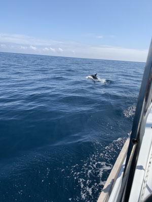 In den knapp 3 Tagen auf der Biskaya besuchen mich immer wieder Delfine und spielen eine Weile um das Boot herum, bis es dann zu langweilig wird und sie weiterziehen
