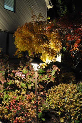 Elevating a Path light ,with an extension riser, allows it to illuminate the colorful surrounding flora.