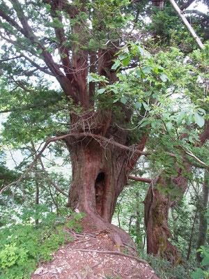 大杉です。休憩したくなります。