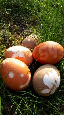 Eier mit Naturmaterialien färben