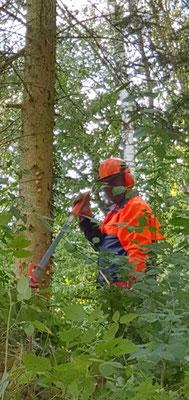 Solche Werkzeuge knicken die stärksten Bäume