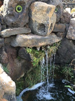 jardin-de-cactus