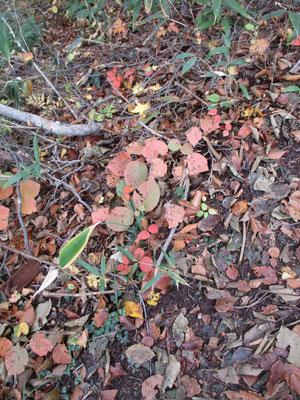 足元の落葉も秋色になっている