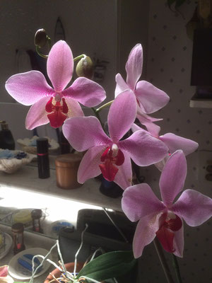 Orchidées chez Chantal et Michel