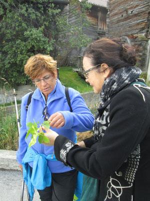 Annemarie Heiniger (re) erklärt Myriam Drancic eine Pflanze.