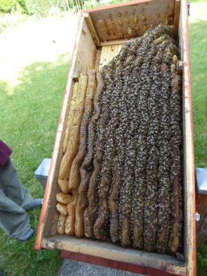 Blick in die Bienenkiste
