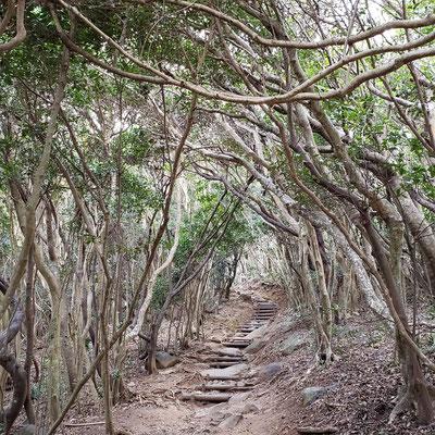 糸島 トトロの森