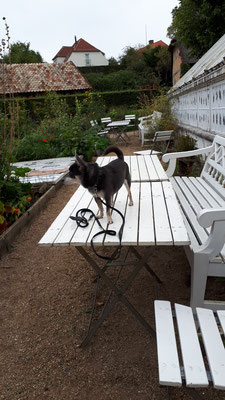 Barny inspiziert die Gärtnerei