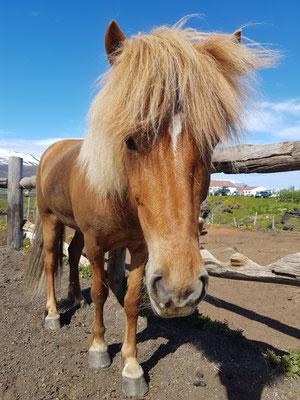 Mein Pony von Lava Horse
