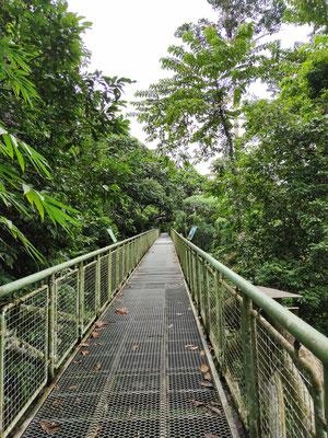 Canopy Skywalk im Rainforest Discovery Center, Sepilok, Sabah, Malaysia
