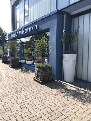 Kundenfoto Olivenbaum im Eingangsbereich bei den Strandkorbprofis www.hanse-palmen.de