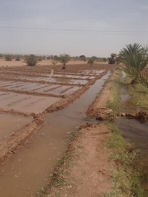 Bwässerung des Rote Beetefeldes