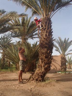 Palmenkletterin