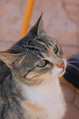 Katze schaut zu